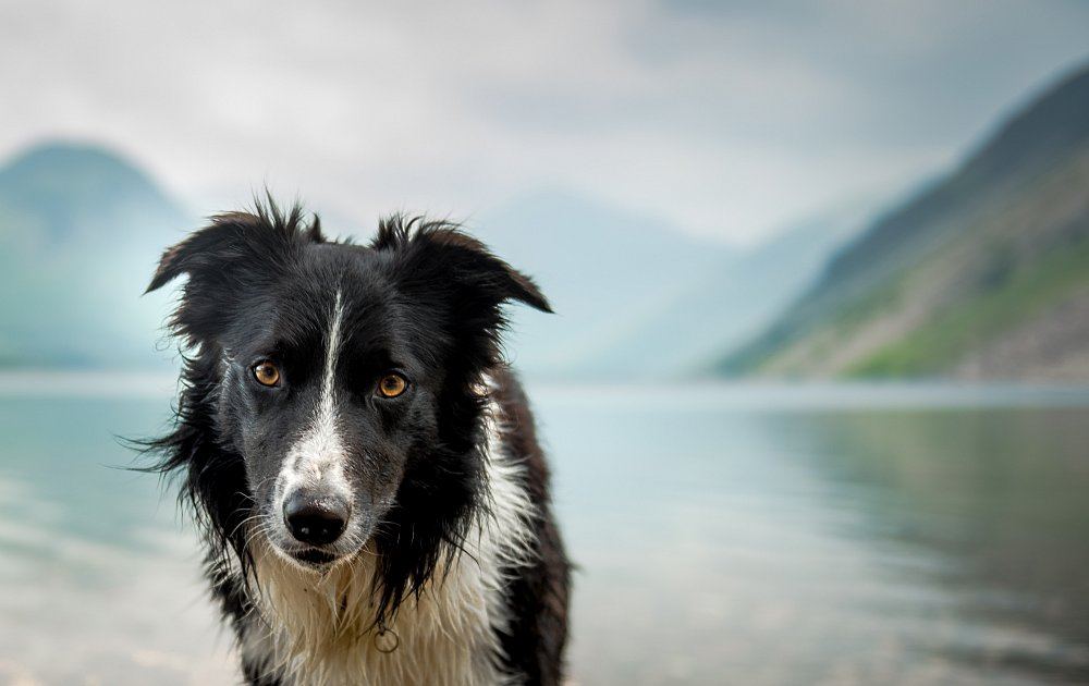 Pictures Of  Dogs