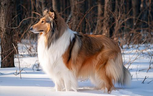 Dog Breed Atlas Different Amp Cool Dog Breeds