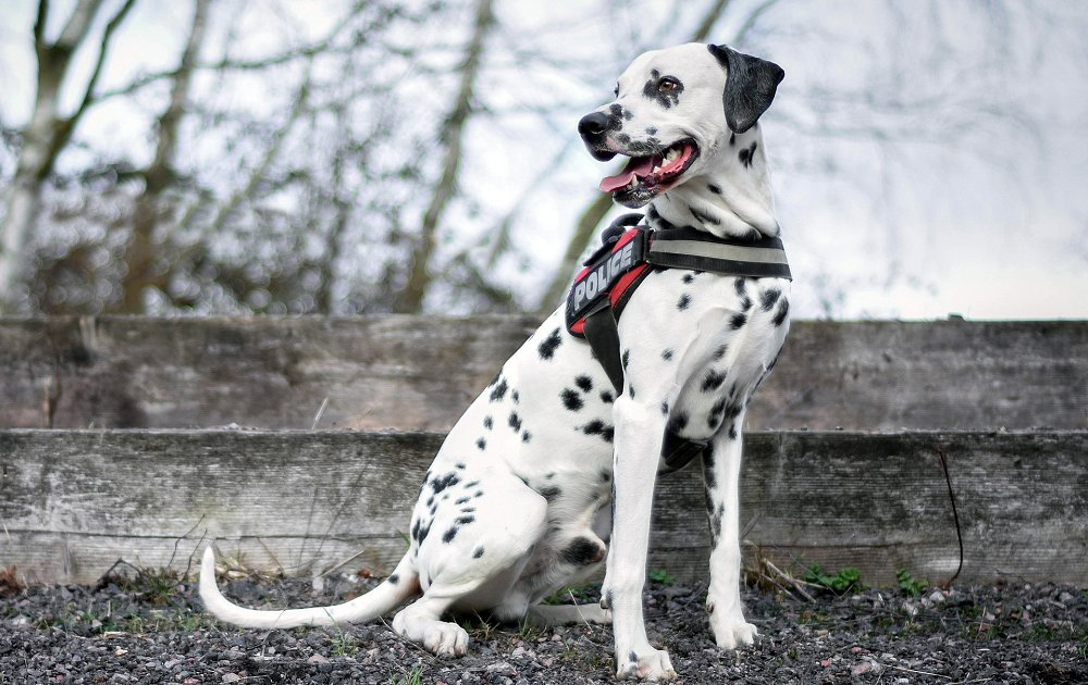 Top Breed Dogs Pics