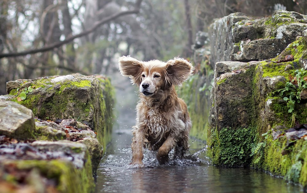 English Dog Breeds Pictures