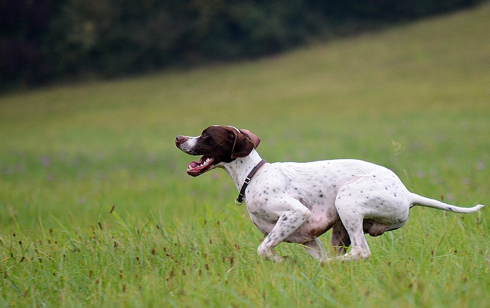 Top Breeds Of Dogs
