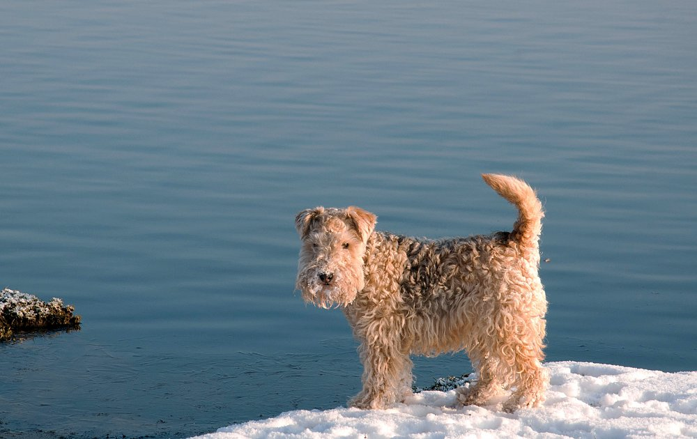 Pictures Dog Breeds