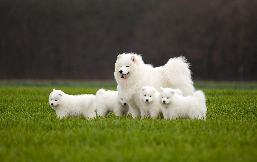 Dog Breed Information And Facts